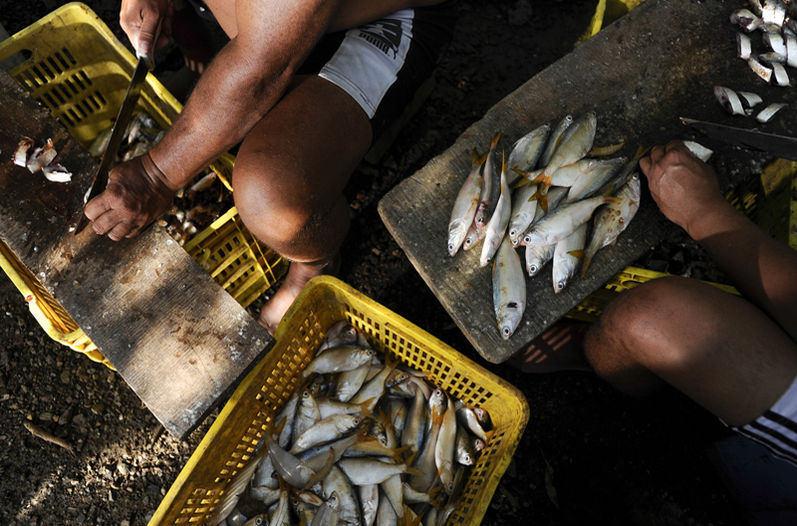 exportadoras-pescadores-Mexico-LUIS-NAVARRO_LNCIMA20150918_0008_5