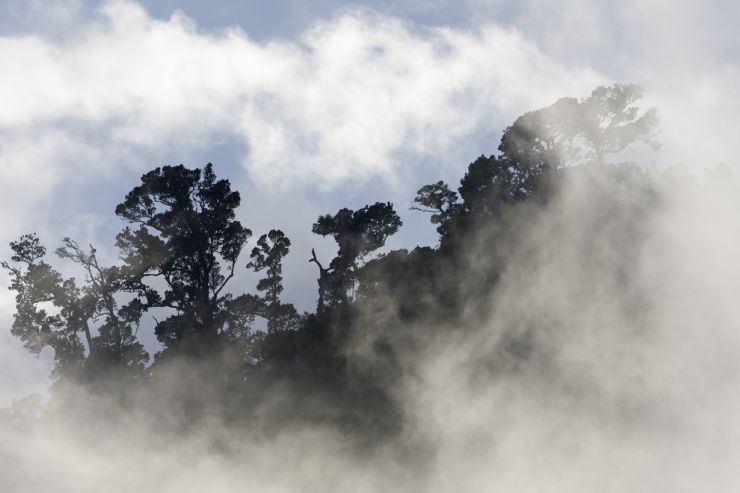 Very low clouds on Santa Elena Cloud Forest Reserve