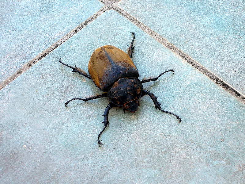 Gross! This was one of the biggest bugs I've ever seen, in our apartment!