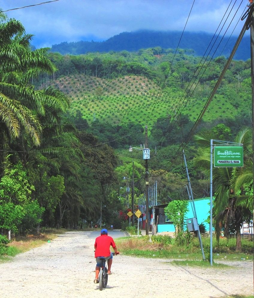 A palm oil plantation climbs a hillside in Osa, Costa Rica. Growing palm oil trees provides an economically valuable commodity but causes deforestation and may contribute to loss of biodiversity and, eventually, of biotourism income. Image: Carter Hunt