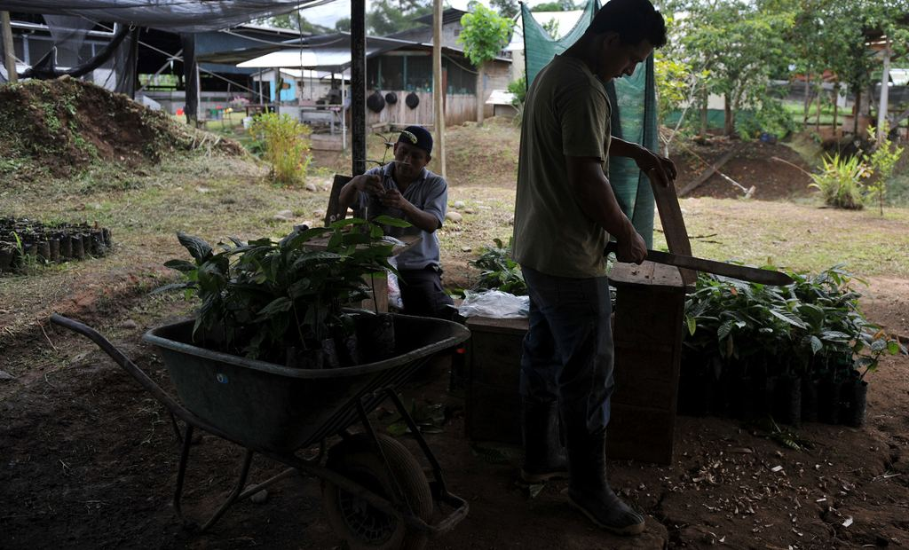 A Longevity Puzzle: Why Do Poor Costa Ricans Outlive Poor Americans?