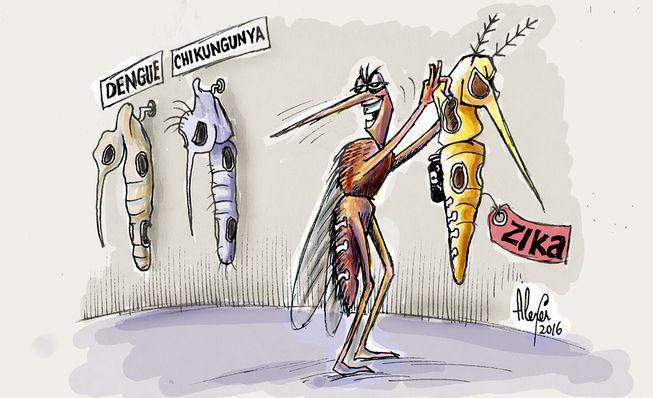 One Mosquito, Three Viruses