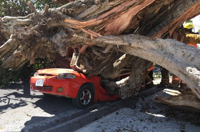 A tree fell on a car in Liberia killing the driver, the sole occupant of the vehicle