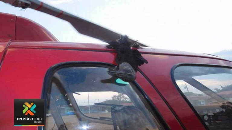 Buzzard Crashes Into Helicopter Nearly Causing Tragedy