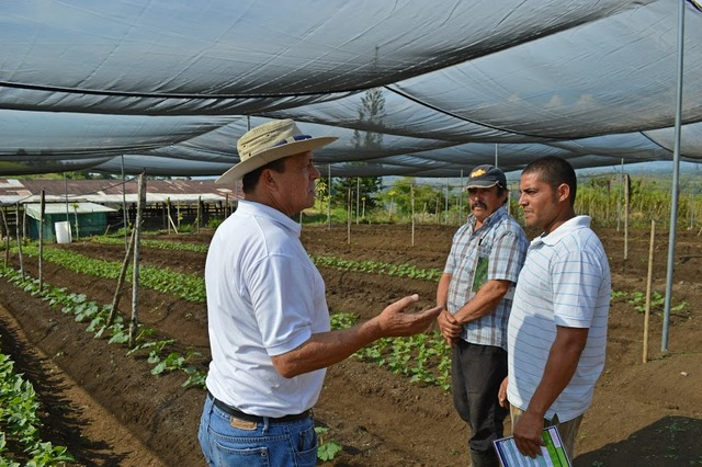 FAO expert Guillermo Murillo (wearing a hat) talks to family farmers in the settlement of Los Reyes in southeast Costa Rica about techniques for improving production in their shade houses. Credit: Diego Arguedas Ortiz/IPS