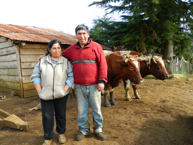 This Mapuche couple, Luis Aillapán and his wife Catalina Marileo, were tried and convicted under an anti-terrorism law for protesting the construction of a road across their land, which violated their land rights. Credit: Marianela Jarroud/IPS