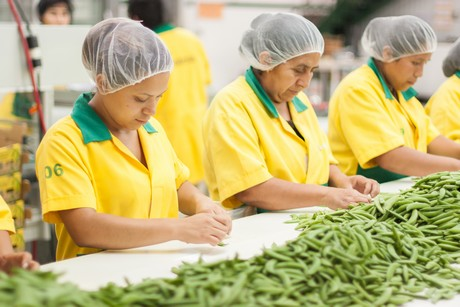Guatemala is pioneer of fruit and vegetable exports
