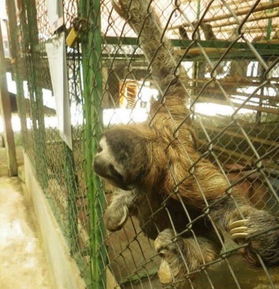 slothcage