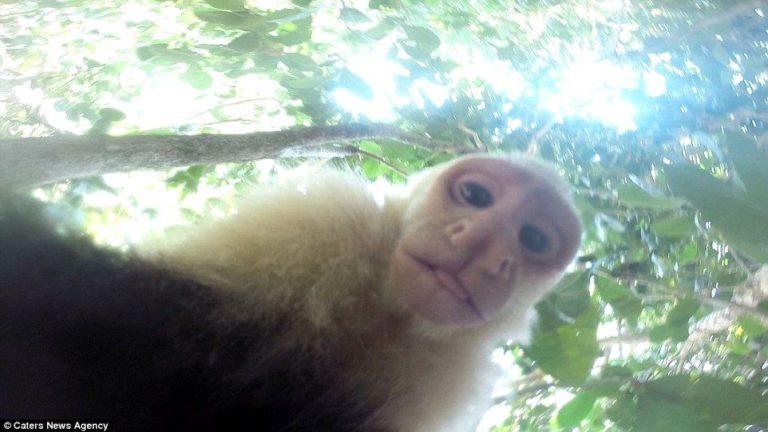 Costa Rica Monkeys Direct Own Film