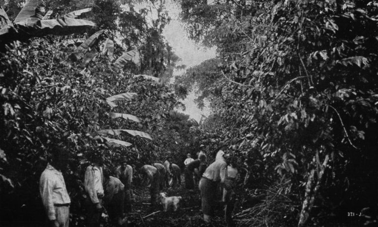 History of Coffee in Costa Rica and Captain Le Lacheur (Video)