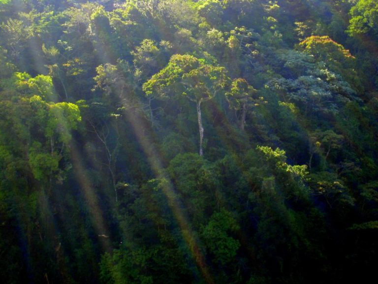 Costa Rica Society: Trickle-Down Corruption