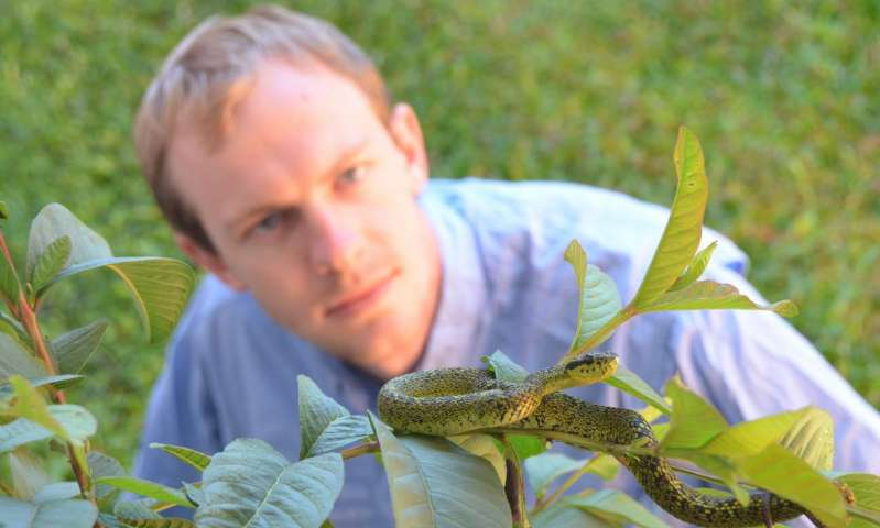 The newly discovered Talamancan Palm-Pitviper is a striking green-and-black snake living in some of the most remote regions of Costa Rica, said lead researcher, UCF Biologist Chris Parkinson. The coloring is a characteristic it shares with its close relative the Black-Speckled Palm-Pitviper. In fact, these two species look so similar that the Talamancan Palm-Pitviper went unrecognized for more than 100 years. It is a case of cryptic speciation, where two species look almost identical, but are genetically different. Credit: University of Central Florida Read more at: http://phys.org/news/2016-07-venomous-snake-costa-rica.html#jCp