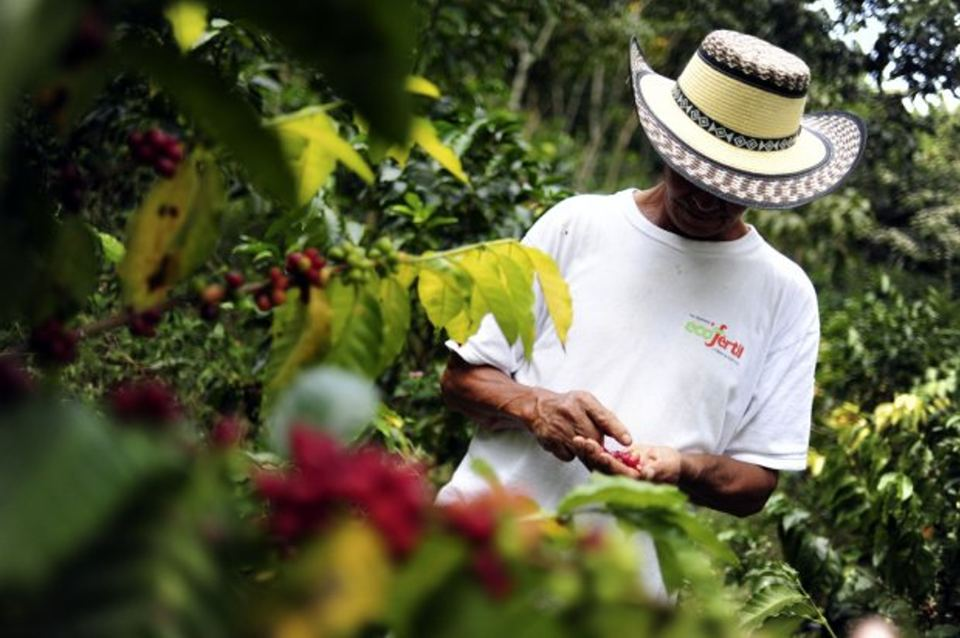 National adaptation policy adopted in Nicaragua and resulting investments in coffee and cocoa sector