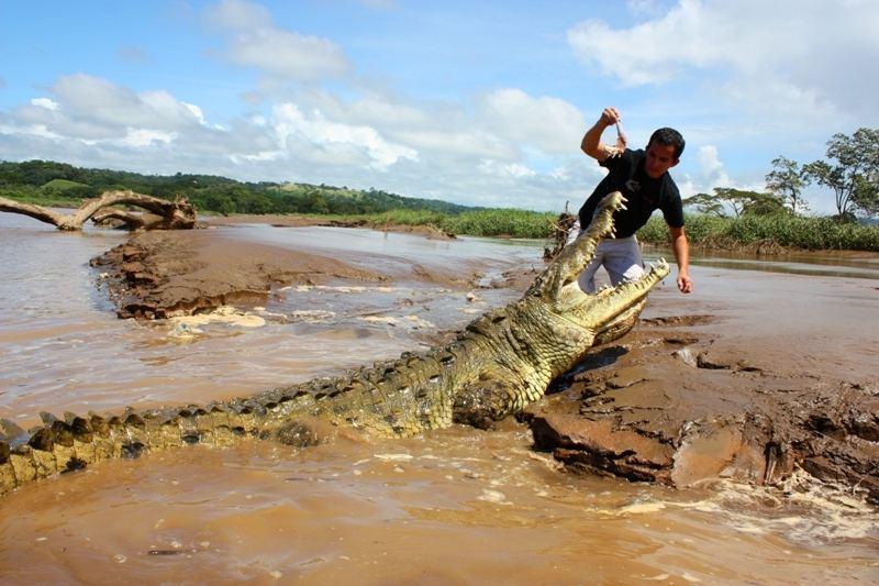 Crocodile-Adventure-Tours-Jaco