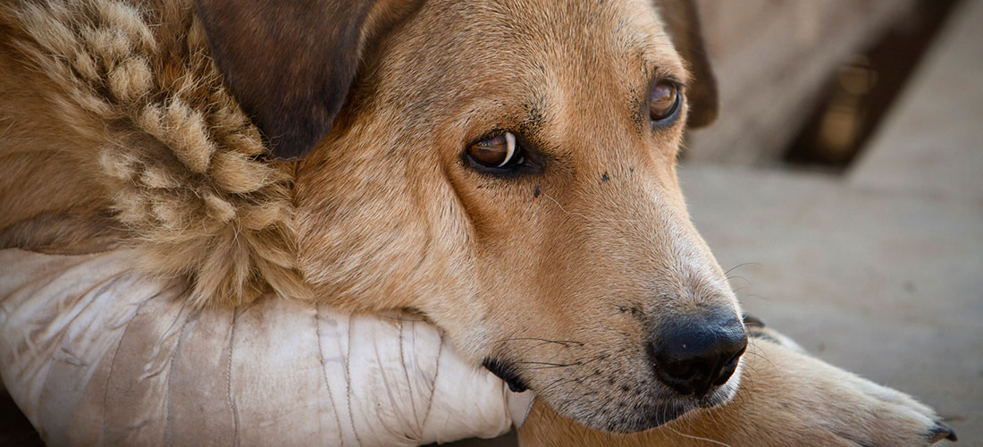Legislators approved in first debate the law against animal abuse that punishes animal cruelty with jail time or hefty fines for not picking up dog poo or being able to care for pets, among other things