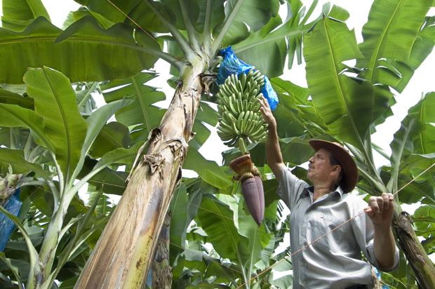 A worker at a banana plantation in Costa Rica.