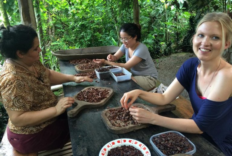 Costa Rica Increases Cocoa Cultivation