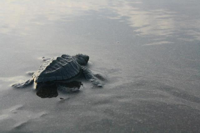 turtle-baby-02