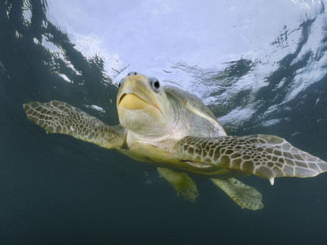 The Forgotten Sea Turtle Beaches in Costa Rica
