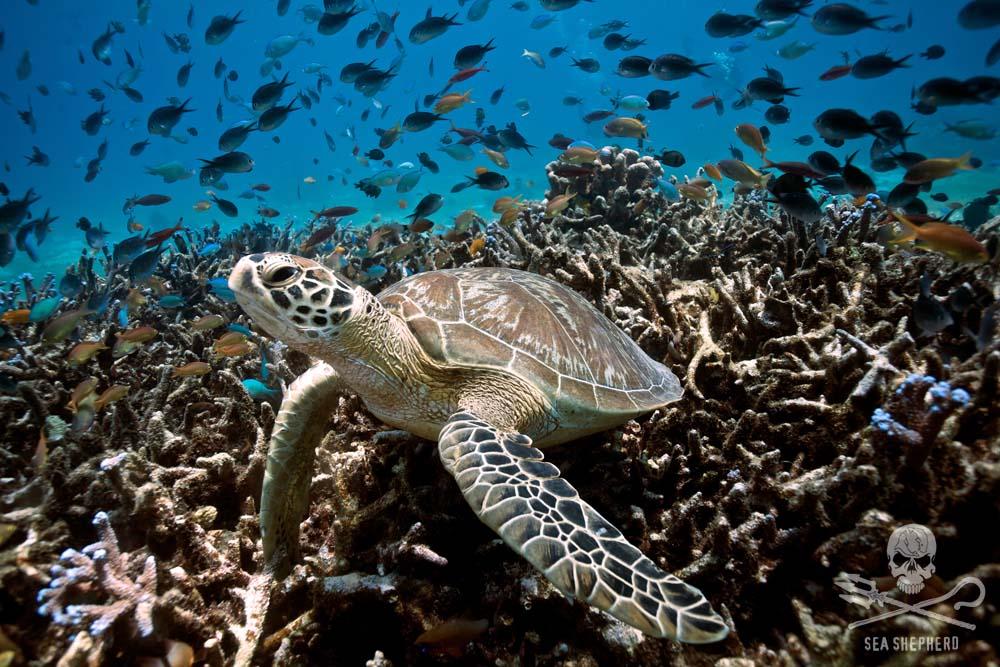 Photo from Sea Sheperd website