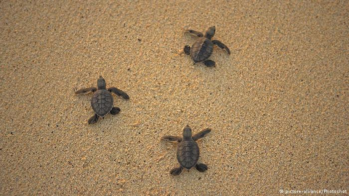 Cracking the bad eggs of the turtle trade