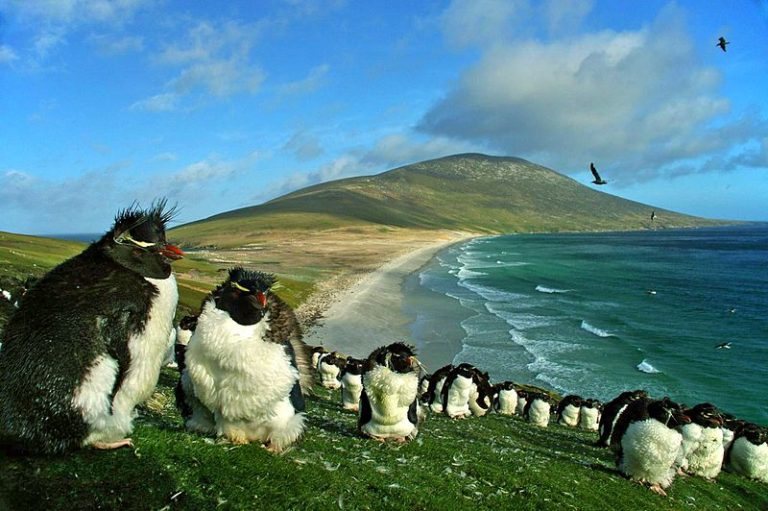 Argentina's Foreign Ministry Deplores Military Exercises in Falkland Islands (Malvinas)
