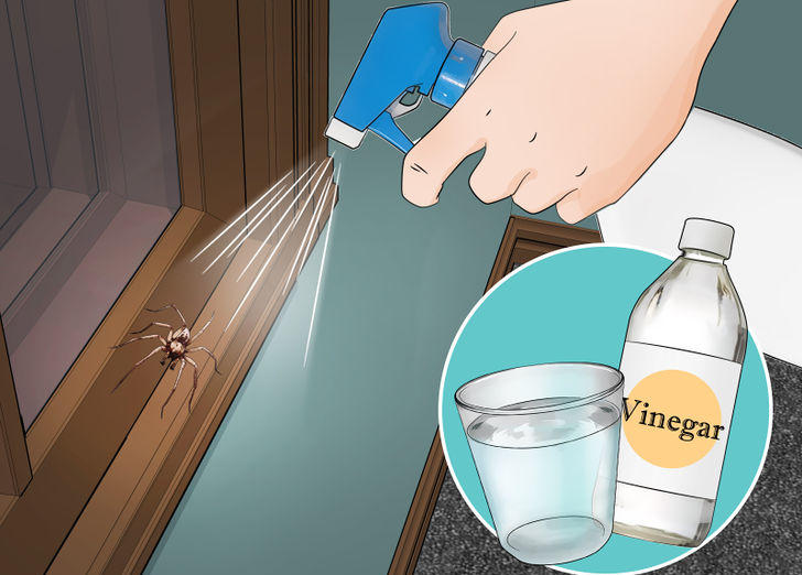 Two parts water and one part white vinegar will make your house free of spiders and other nasty insects