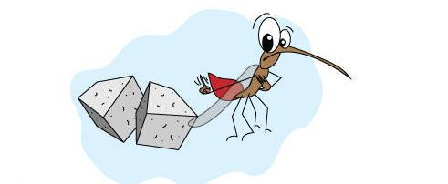 Ten Myths and Truths About Dengue, Zika and Chikungunya