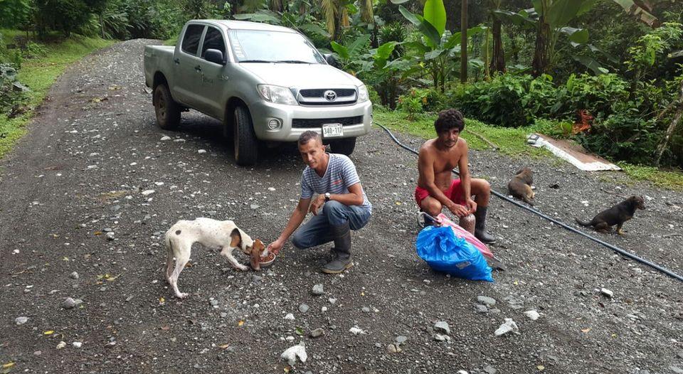 ayuda-animales-llega-regiones-afectadas_lncima20161125_0224_5