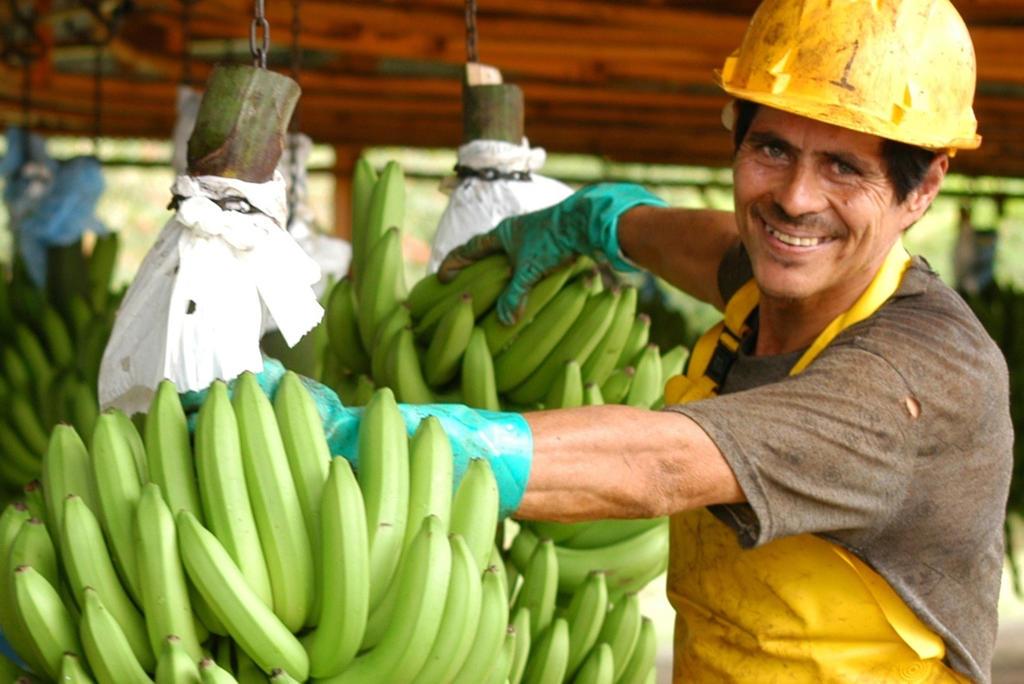Banana worker. Costa Rica