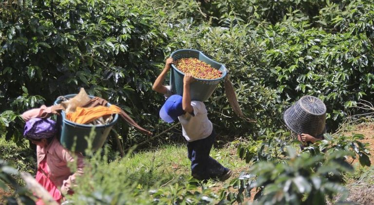 Costa Rican Coffee Exports Surge