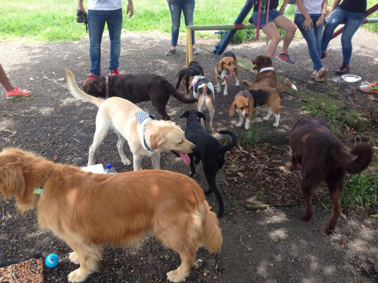 San Jose Readying Its First Park of Dogs