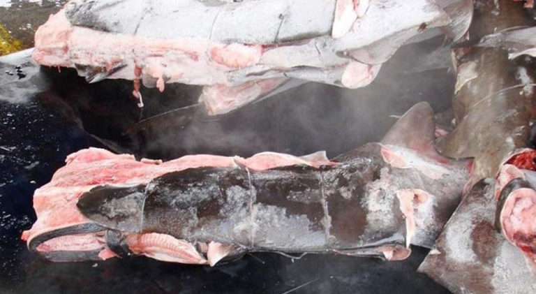 Costa Rica Records First Conviction For Shark Finning