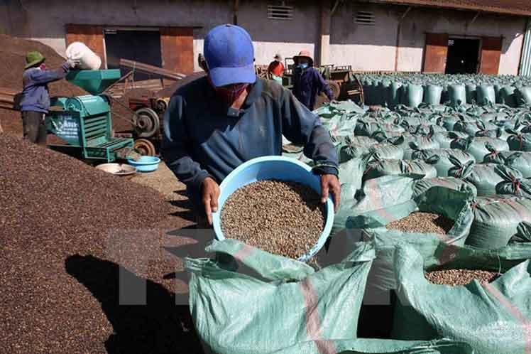 Brazil to Acquire Vietnamese Robusta Coffee