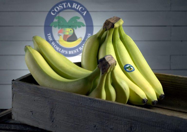 Banana Exports Up 7%