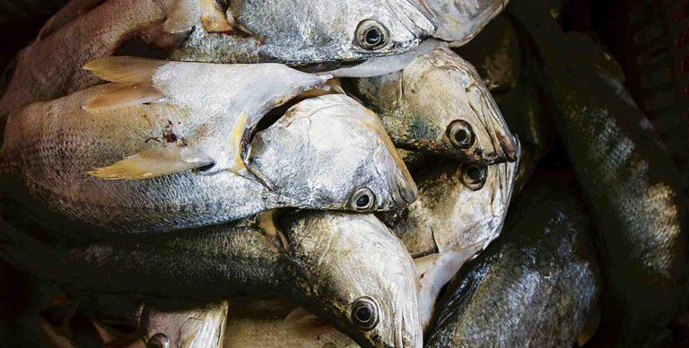 Bureaucracy is Killing the Gulf of Nicoya