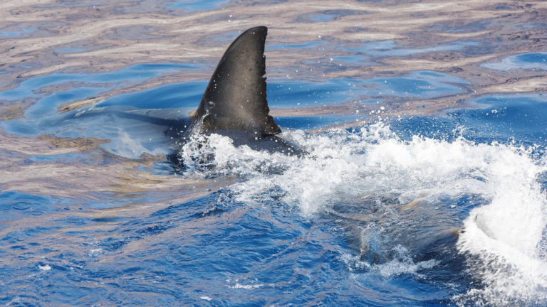 Gruesome Shark Finning Discovery Leads To Major Legal Victory For Sharks