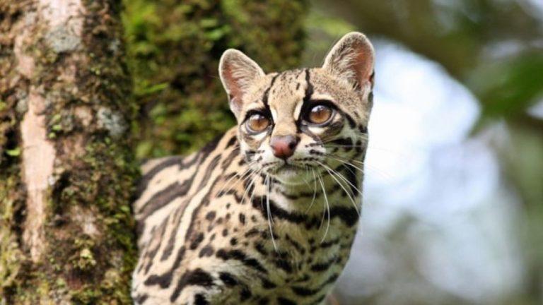 Top 10 Exotic Animals of Costa Rica