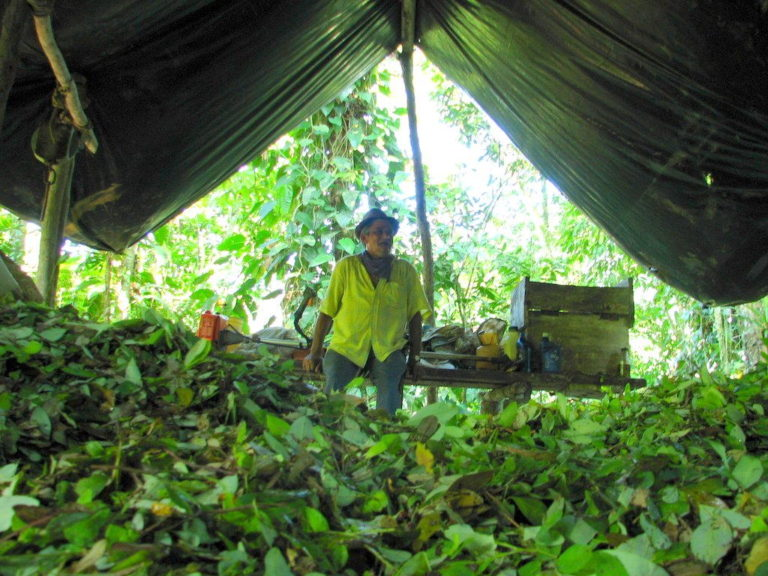 The Regions of Colombia Playing the Biggest Role in the Coca Boom