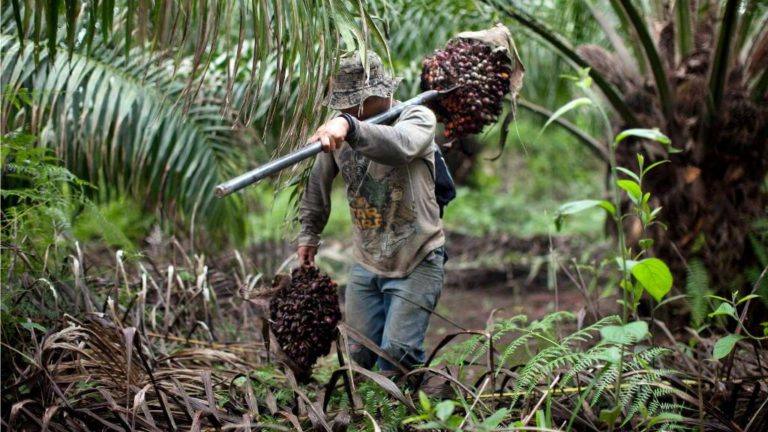 The Potential of Palm Oil in Nicaragua