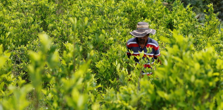Why Coca Leaf, Not Coffee, May Always be Colombia's Favourite Cash Crop