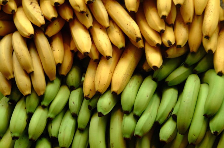 Honduras makes 37.2% more from banana exports