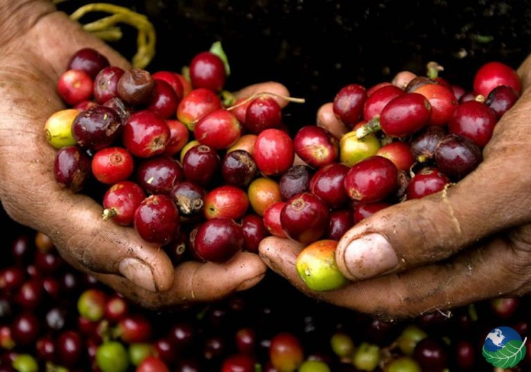 Why the mountains of Costa Rica produce some of the world's finest coffees