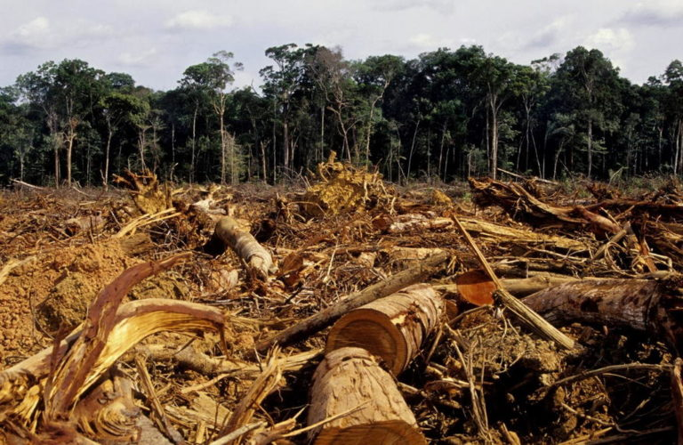 Drug Traffickers Destroying Large Sections of Central America Forests: Report