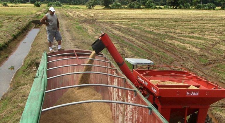 NO To Fixing Rice Prices In Costa Rica