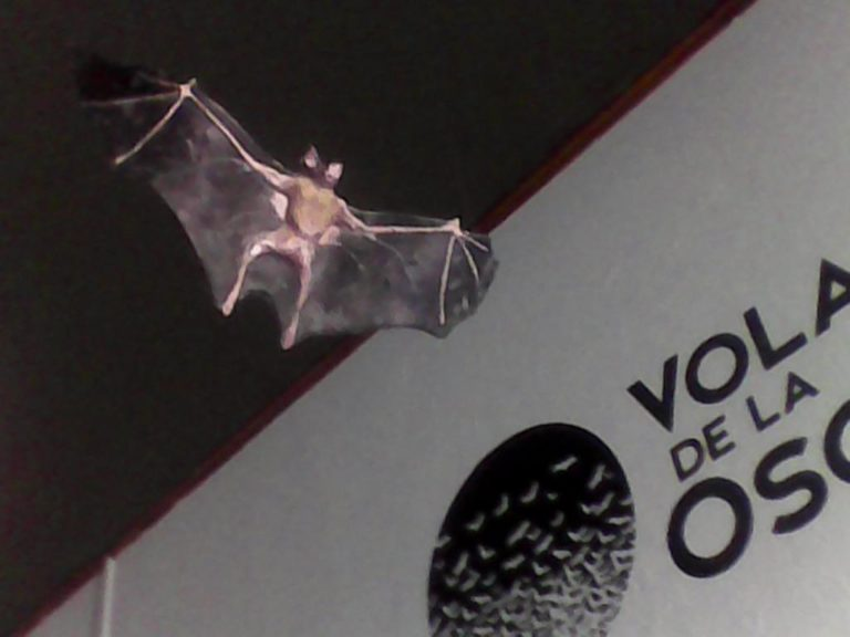 New Bat Exhibit in San Ramon Museum