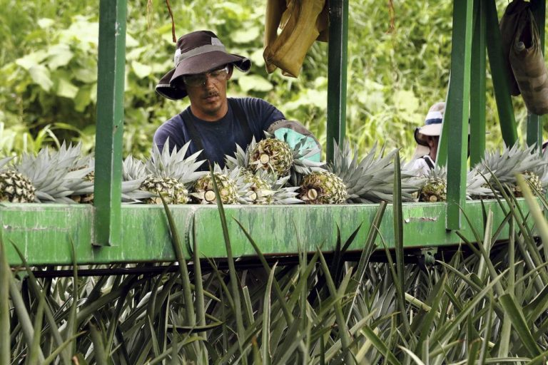 Costa Rica Ships 1st Cargo Of Pineapples to China