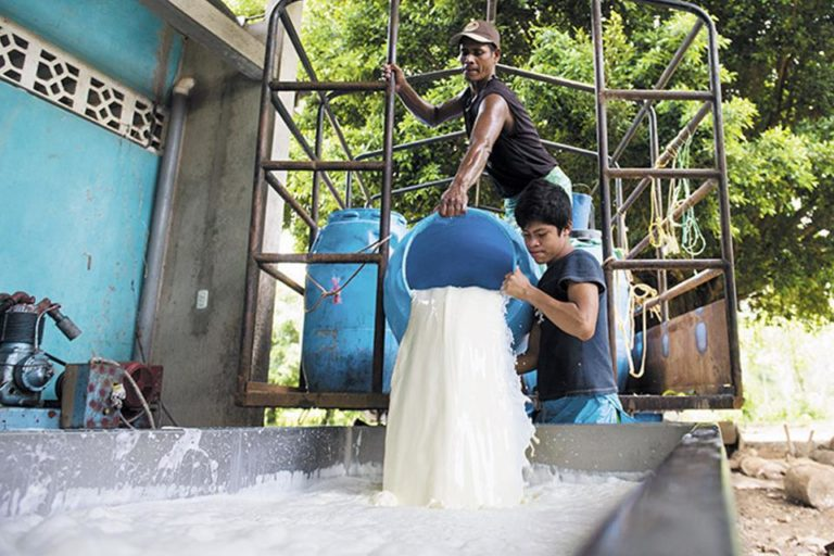 Nicaragua Concerned About Import Restriction on Dairy Products