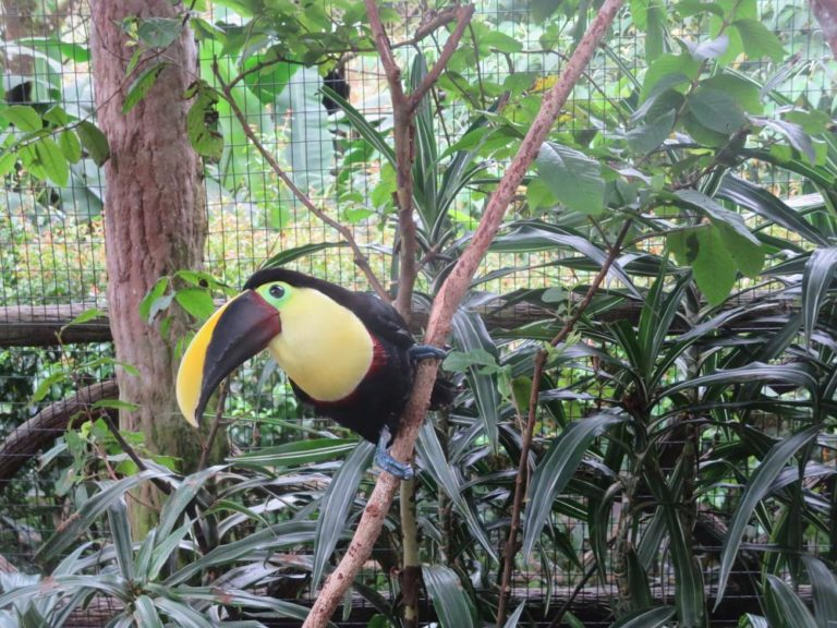 Travel: Nature, adventure beckon in Costa Rica