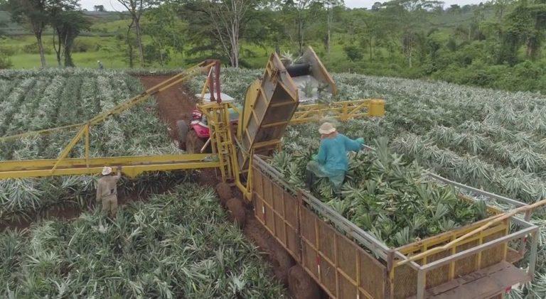 Construction of Biofertilizers Plant